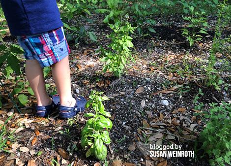 Blog - noah garden