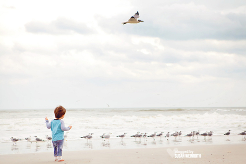 Blog - nash 20 months birds beach