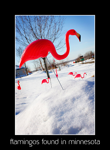 Flamingos_for_blog_2